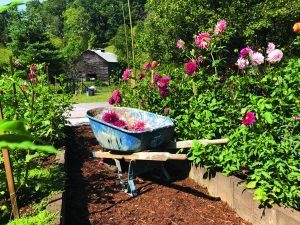 GP barn and wheelbarrow 300x225 - Meet a Grower